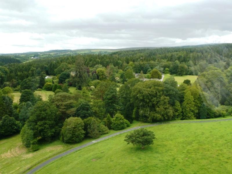 Aughentaine Woodlands